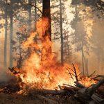 Các công ty hàng đầu thế giới kêu gọi hành động bảo vệ thiên nhiên